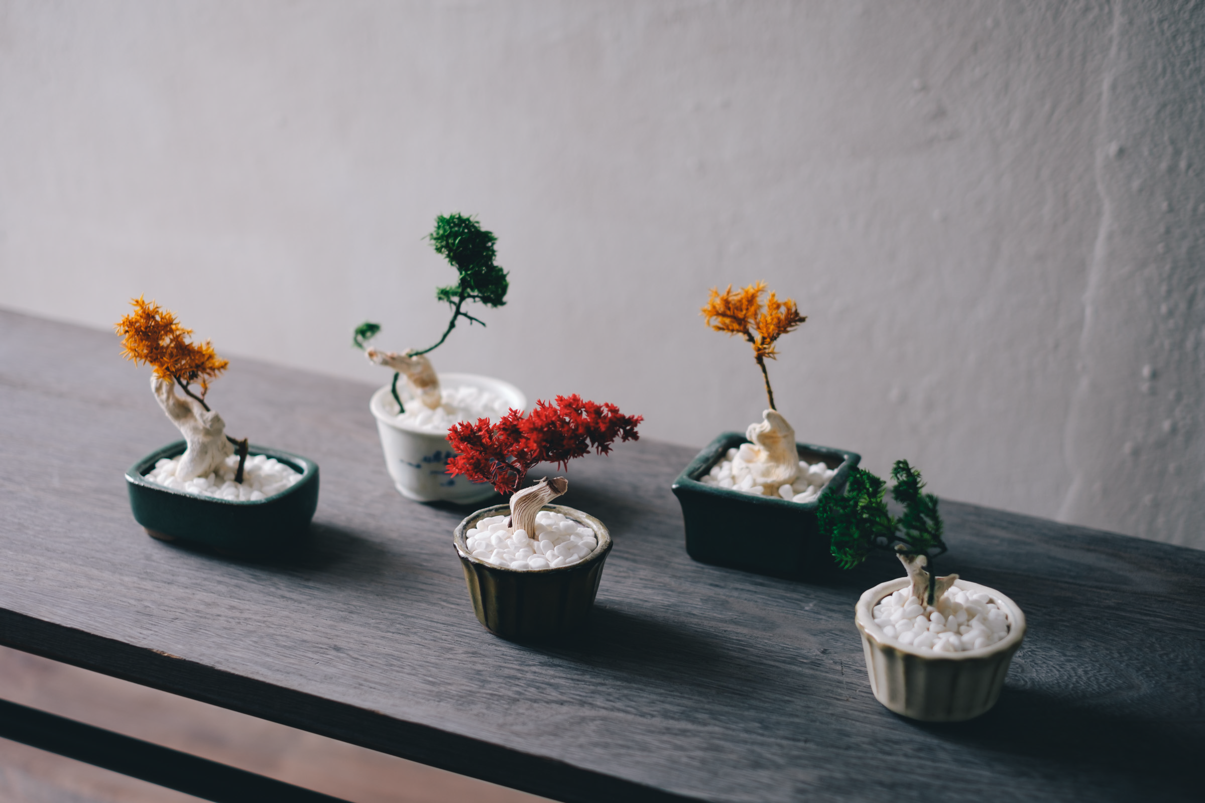 Hama House presents 「楽しい盆栽展」