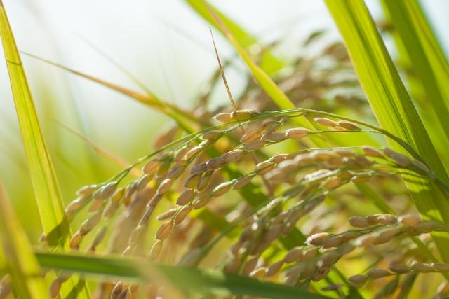 9/26(水)浜町サービスパス所有者限定月末交流会     [秋の収穫祭]