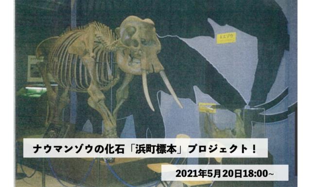 ナウマンゾウの化石「浜町標本」プロジェクト!